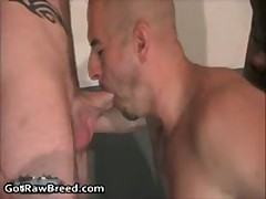 Sage Daniels, CJ Banks And Xavier Wolf In Super Hot Gay Groupsex 2 By GetRawBreed
