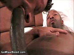 Kamrun And Ray Dalton In Horny Gay Porn Fucking And Sucking 2 By GetRawBreed