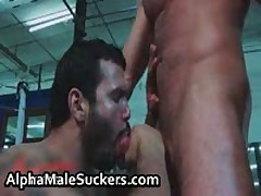 Horny Gay Hardcore Fucking And Sucking 53 By AlphaMaleSuckers