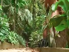 Alex'S Brazilian Cock
