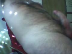 Oso Pajero De Argentina
