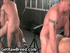 Tyler Reed, Phoenix Grey And Dominik Rider Gay Threesome 13 By GetRawBreed