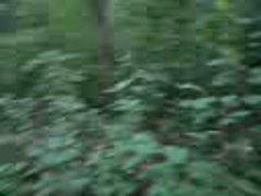 Cum In Woods