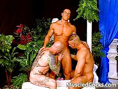 Buff Gay Sex In The Palace